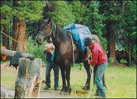 Horseback adventures for groups