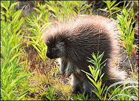 Wildlife Willmore Wilderness Foundation
